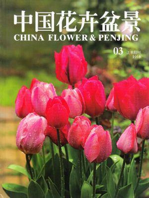 中国花卉盆景2018年3月期