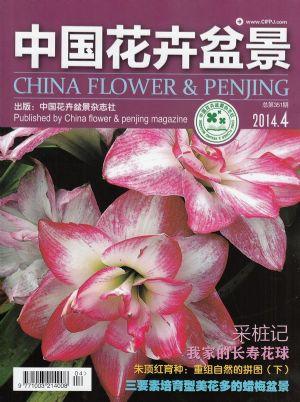 中国花卉盆景2014年4月期