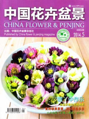 中国花卉盆景2014年5月期